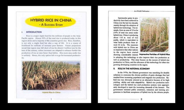Hybrid Rice in China