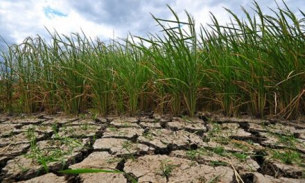 Joint action from ASEAN, other rice-growing countries, key to managing looming food crisis