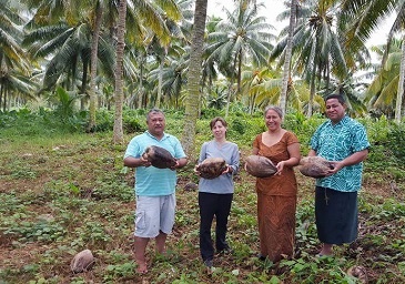 New project to save diversity of coconuts in the Pacific Islands
