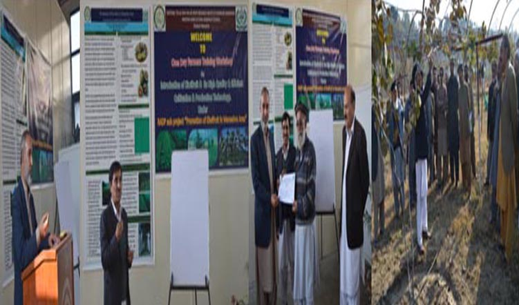 "One Day Farmers Training Workshop on ""Introduction of Kiwifruit – Its High Quality Production & Efficient Cultivation Technologies"" at NTHRI Shinkiari Mansehra"