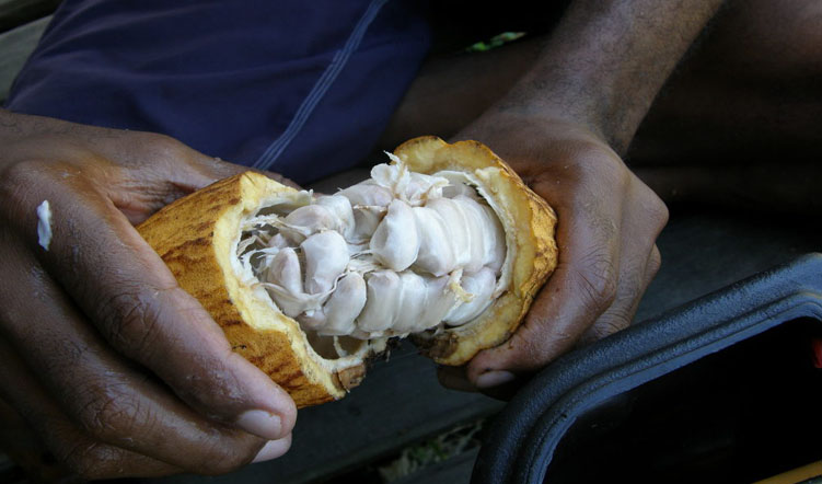 Fiji's first community managed cocoa processing unit launched