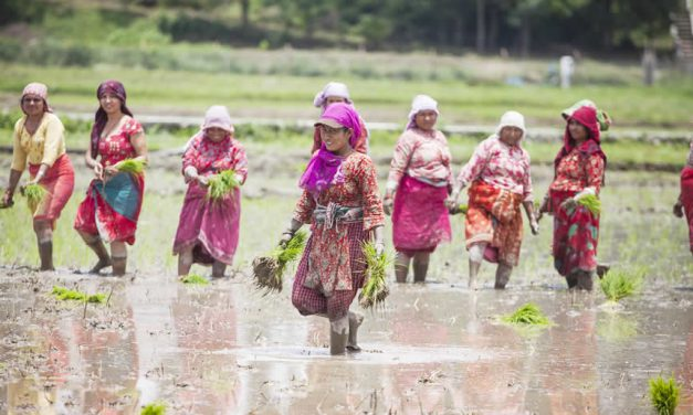 Women planting paddy in Nepal ©ICIMOD