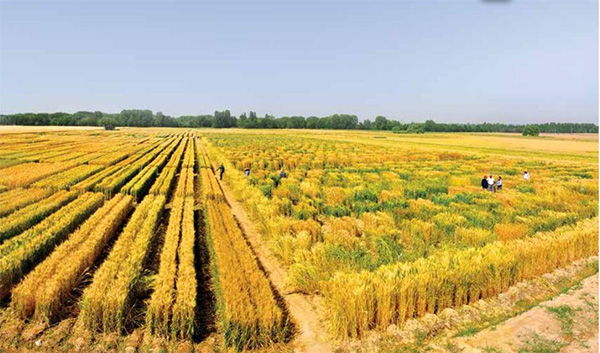 Dryland and irrigated field and holticultural crops ©AREEO