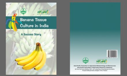 Banana Tissue Culture Success Story