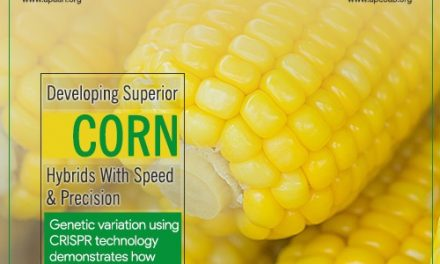 Developing Superior Corn Hybrids with Speed and Precision