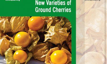 Experts to develop new varieties of ground cherries