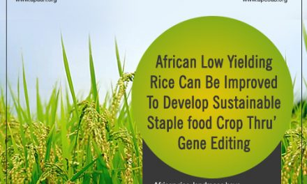 African Low Yielding Rice Can Be Improved To Develop Sustainable Staple food Crop Thru' Gene Editing.