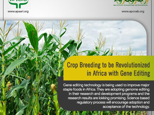 Crop Breeding to be Revolutionized in Africa with Gene Editing