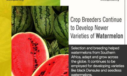 Crop Breeders Continue to Develop Newer Varieties of Watermelon.