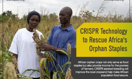 CRISPR Technology to Rescue Africa's Orphan Staples