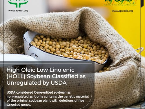 High Oleic Low Linolenic (HOLL) Soybean Classified as Unregulated by USDA