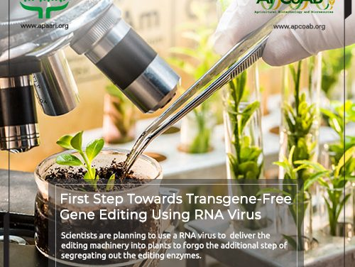First Step Towards Transgene-Free Gene Editing Using RNA Virus