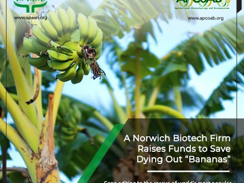 A Norwich BioTech Firm Raises Funds to Save Dying Out Bananas