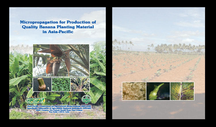 Micropropagation for Production of Quality Banana Planting Material in Asia-Pacific