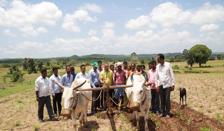 Enhancing tribal farmers' incomes through value addition