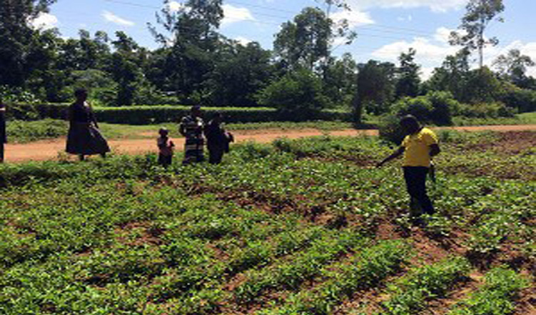 Improving the resilience of agricultural systems through innovation platforms: Creating space for farmer participation in research
