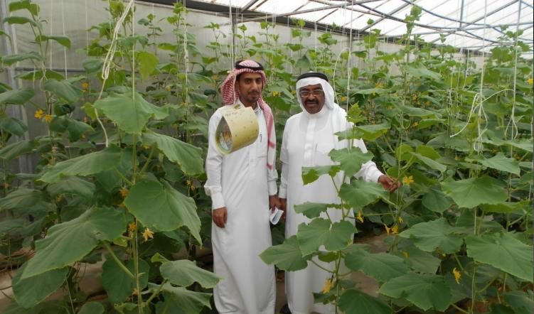ICARDA contributes to scaling-out successful water use technologies in Saudi Arabia