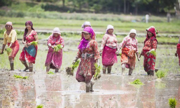 Women planting paddy in Nepal ©ICIMOD