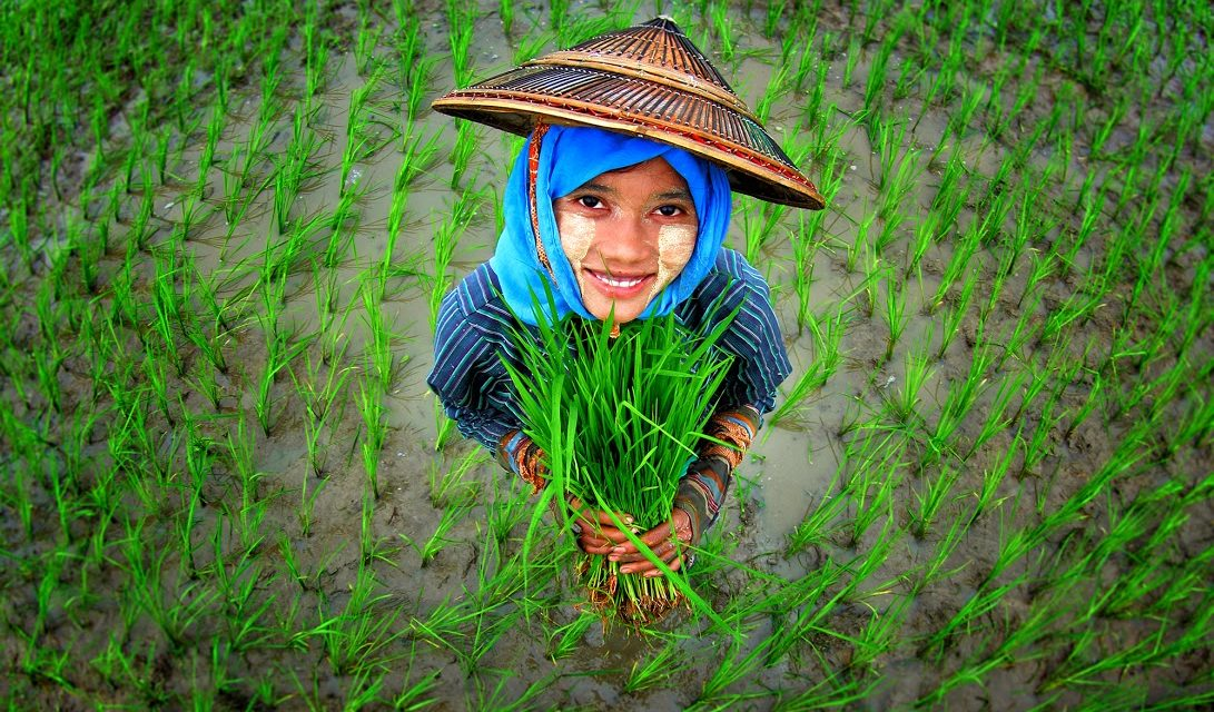 Girl surrounded by rice plants @ Bioversity International