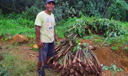 Farmer of Raravula settlement located near Nakawakawa village @ MAF Fiji