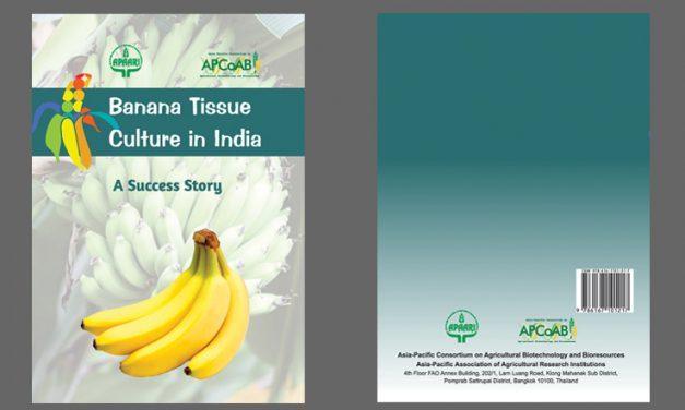 Banana Tissue Culture Success Story