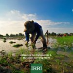 Director Partnerships and Business Development position at IRRI