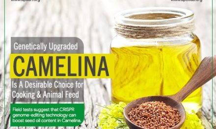 Genetically Upgraded Camelina is a Desirable Choice for Cooking & Animal Feed