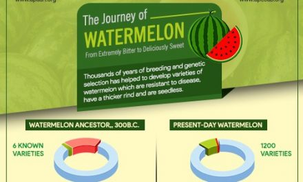 The Journey of #Watermelon – From extremely bitter to deliciously sweet