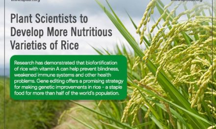 Plant Scientists to Develop more Nutritious Varieties of Rice
