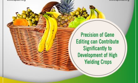 Precision of Gene Editing can Contribute Significantly to Development of High Yielding Crops.