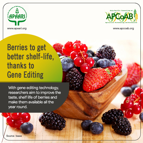 Berries to get better Shelf-Life,Thanks to Gene Editing