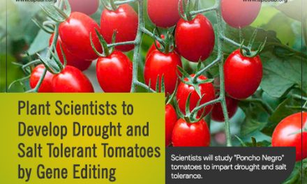 Plant Scientists to Develop Drought and Salt Tolerant Tomatoes by Gene Editing