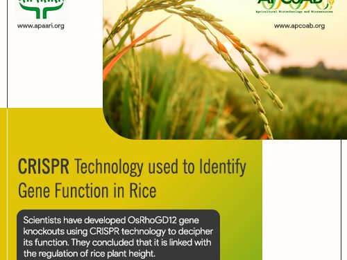 CRISPR Technology used to Identify Gene Functions in Rice