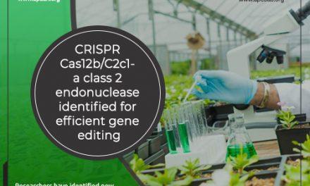 CRISPR Cas12b/C2c1- a Class 2 Endonuclease Identified for Efficient Gene Editing