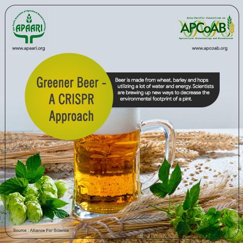 Greener Beer- A CRISPR Approach