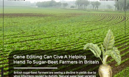 Gene-Editing Can Give a Helping Hand to Sugar-Beet Farmers in Britain