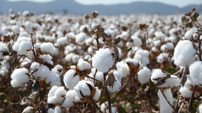 Understanding Pakistan's cotton agriculture